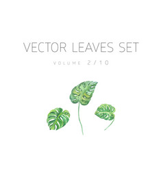 Bright watercolor set of leaf vector
