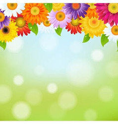 Color gerbers flower frame vector
