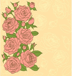 flowers leaves and buds of pink roses vector image vector image
