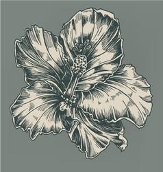 Vintage hibiscus vector