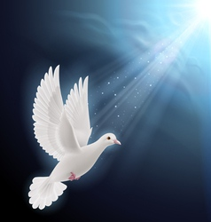 White dove in sunlight vector