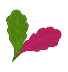 Green and red salad leaves vector
