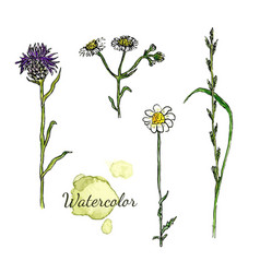 Watercolor botanical set with wild flowers vector