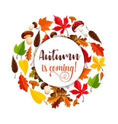 Autumn poster of maple leaf fall vector