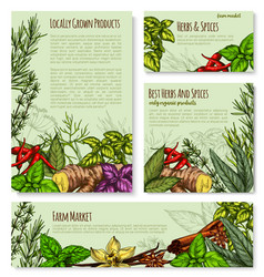 Templates set for spices and herbs market vector