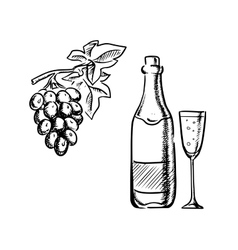 Wine bottle glass and grapes sketch vector
