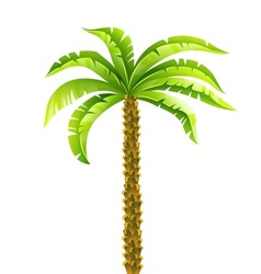 Tropical coconut palm tree vector
