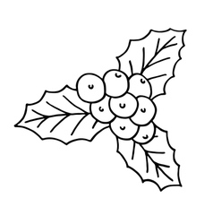 Holly berry icon vector image