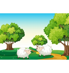 Two white sheeps at the hilltop vector
