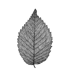 Skeletonized leaf vector