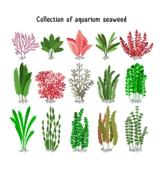 Seaweed set yellow and brown red green aquarium vector