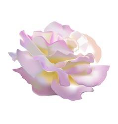 rose petals vector image