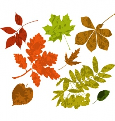 grunge silhouettes of leaves vector image