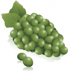 green grapes vector image