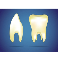 Human teeth vector image vector image
