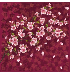 Japanese background with sakura blossom vector image