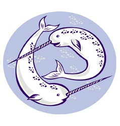 Narwhal monodon monoceros unicorn whale wit vector
