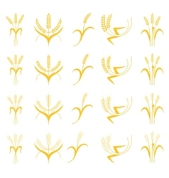 Set Ears of Wheat Barley or Rye vector image