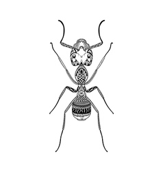 Zentangle stylized Black Ant Hand Drawn Termite vector image