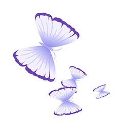 A view of a butterfly vector image vector image