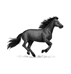 Black horse runs sketch for equine design vector