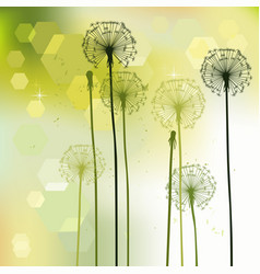 Floral background dandelions vector