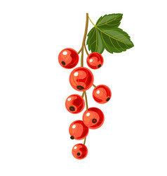 branch of red currant vector image