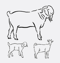 goat pet animal pose hand drawing vector image