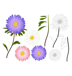 purple pink and white aster outline vector image