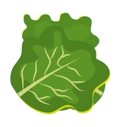 Fresh and green lettuce graphic vector