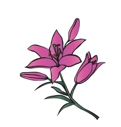 Lily on white background vector