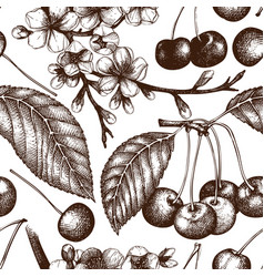 cherry vintage background vector image
