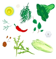 Greenery and spices vector