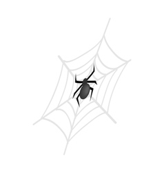 A spider and a web isometric 3d icon vector