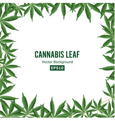 cannabis background marijuana frame green vector image
