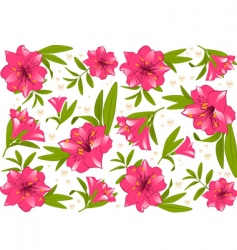beautiful lily vector image vector image