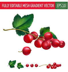 Red currant on white background vector