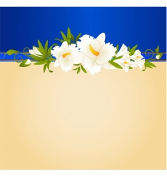 tropical hibiscus vector image