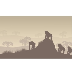 Gorilla group of silhouette in hills vector image