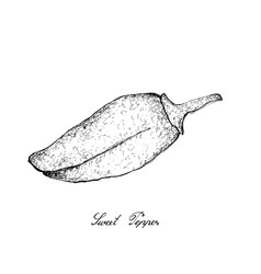 hand drawn of fresh colored bell peppers vector image
