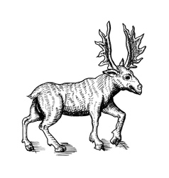 sketch of deer vector image vector image