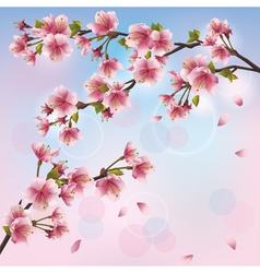 Light background with sakura blossom Japanese vector image