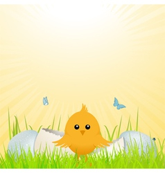 easter chick with broken egg vector image