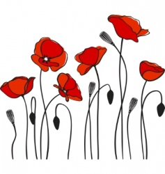 red poppies vector image