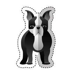 cute french bulldog icon vector image