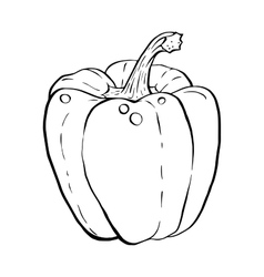 Outline hand drawn sketch of paprika vector