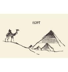Pyramids camel giza cairo egypt vector
