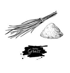 Barley grass and powder superfood drawing vector