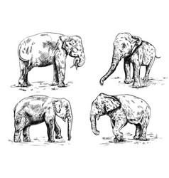 old big elephant set on the white background vector image