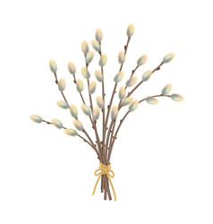 Pussy willow branches vector